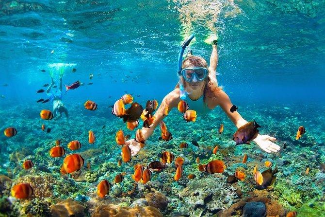 Snorkeling & Mangrove forest adveture in Nusa Lembongan