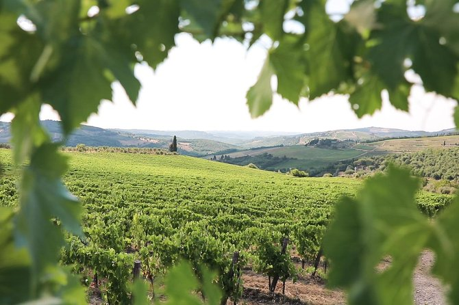 Chianti afternoon Wine Tour from Florence