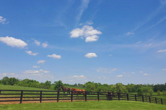 KBT Horse Farm + Buffalo Trace Distillery photo 11