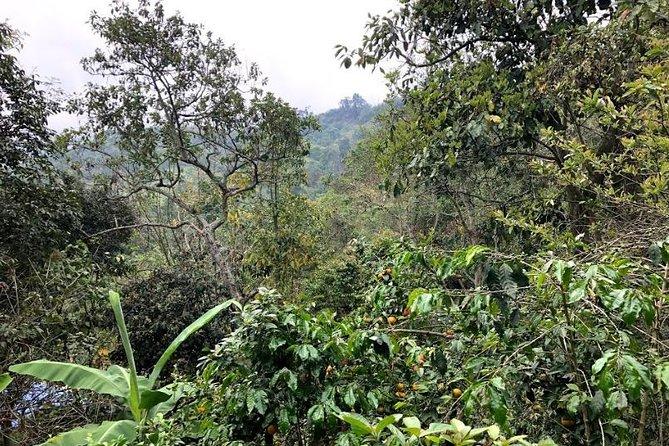 Organic Coffee farm experience and the Tequendama waterfall