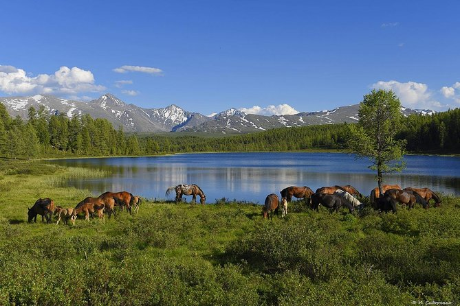 It is the Great round tour «Golden Ring of Altai»