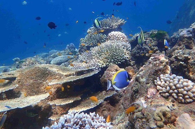 The Best Snorkeling Trip at Yawasam Island & Popular Krabi 5 Islands from Krabi