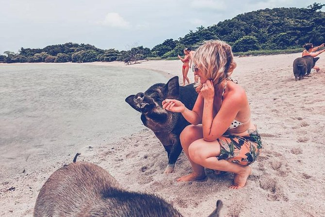 Pig Island Koh Samui by Speedboat with Sunset (Exclusive Pig Feeding Experience) photo 9