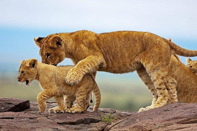 3 Days 2 Nights Samburu National Park Safari