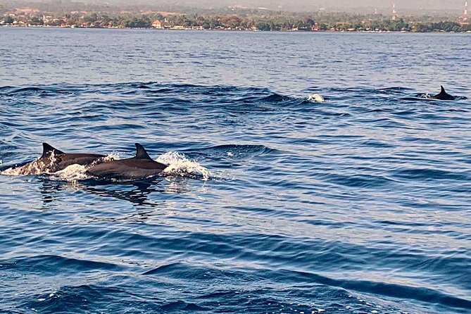 Dolphins Spotting at Lovina Beach