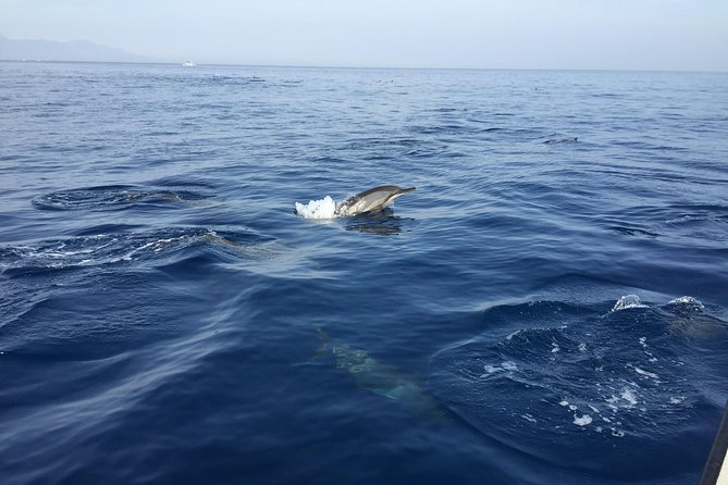 Dolphins Spotting at Lovina Beach photo 6