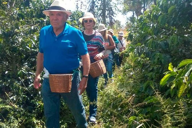 Coffee plantation full-day tour from Medellin private photo 8