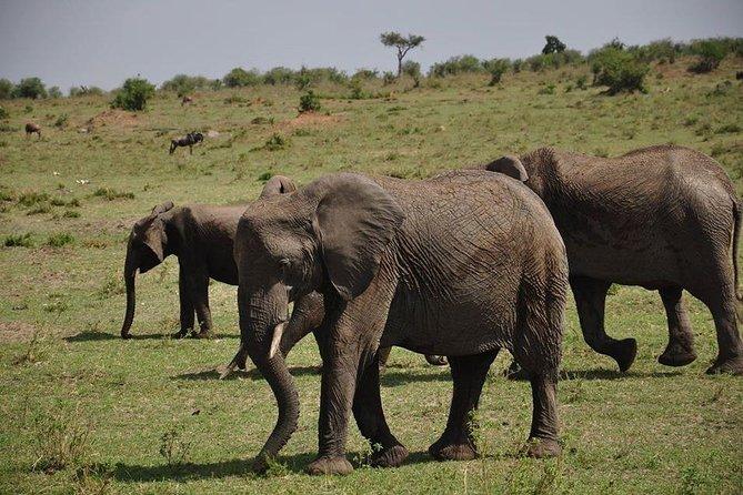 4 Days Budget Camping In Maasi Mara