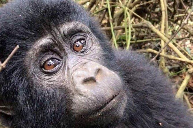 2 day Gorilla Treking