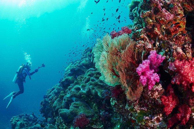 Similan Island Premium Service By SpeedBoat From Phuket