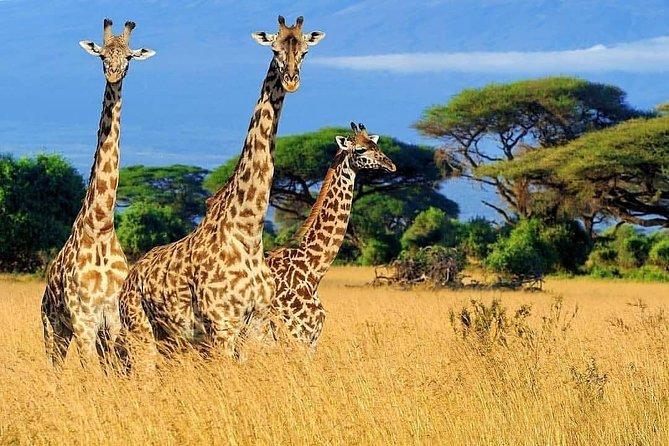 Best of Tanzania Safari