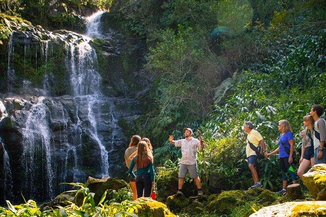 Kohala Waterfalls Small Group Adventure Tour