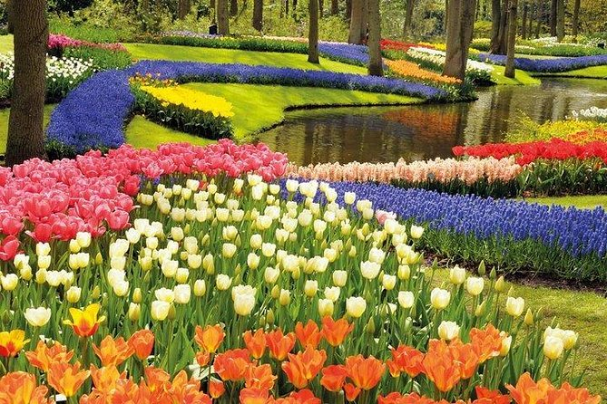 Private tour : Keukenhof Tulips and Delft Tour from Brussels Full day