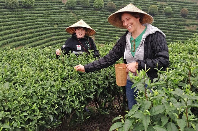 Half-Day Guilin City Tour: Reed Flute Cave and Elephant hill and Tea Plantation