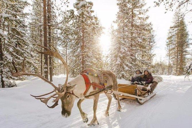 Reindeer Farm Visit & Short Ride