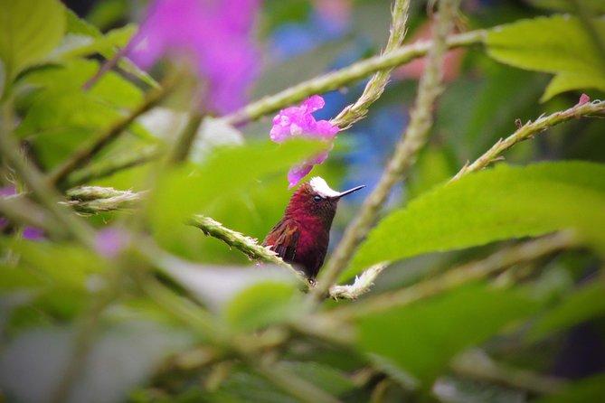 Tenorio Bird Watching