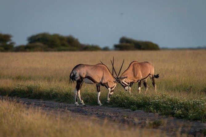 3-Days Central Kalahari Game Reserve