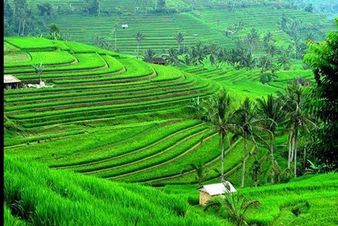 Amazing Jatiluwih Rice Terrace Cultural Heritage Tour