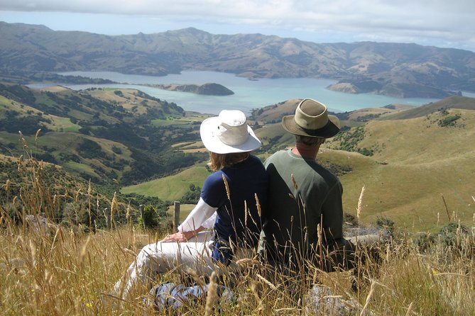 Akaroa and Banks Peninsula Small Group Tour (Nature Cruise or Dolphin Swim)