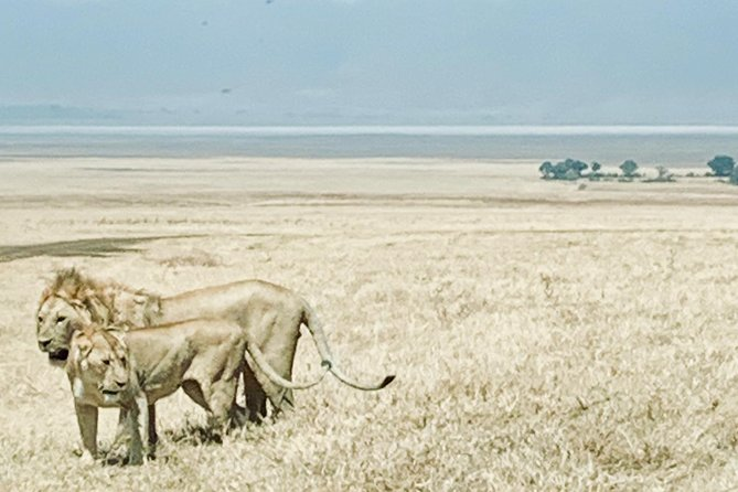 4-Day Luxury Safari