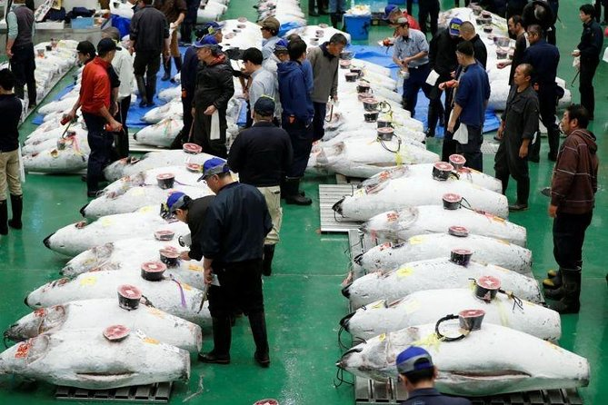 Toyosu Market Morning Tuna Auction and Tsukiji Food Tour with Licensed Guide