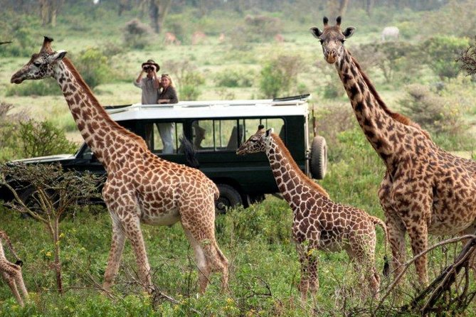 7 Days Migration Kenya and Tanzania private lodge safari photo 1