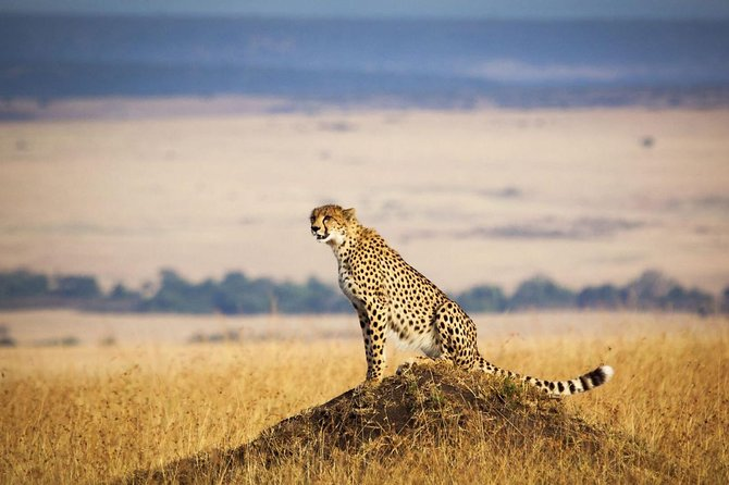 4 Days 3 Nights Serengeti National Park Tanzania Safari