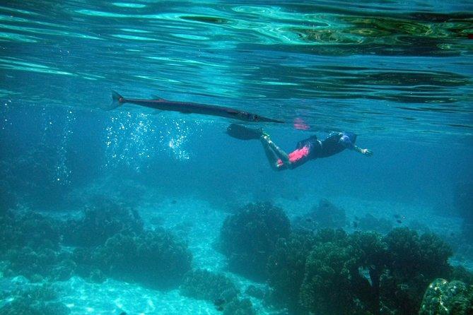 Menjangan Island Snorkeling day trip