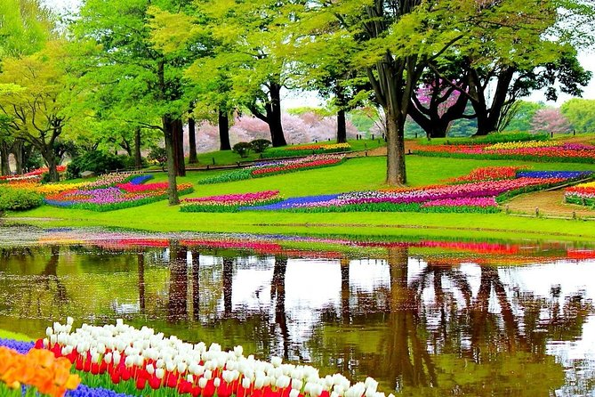 Private Half-Day Trip From Amsterdam to The Tulip Fields in Keukenhof