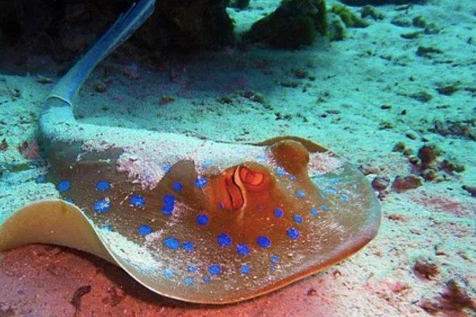 Stingray Discovery Cruise and Gibbs Cay Island