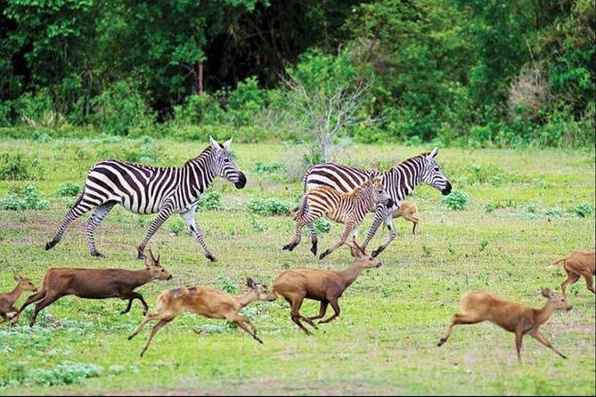 3 Days Coron Palawan Calauit Safari Multi Day Tour