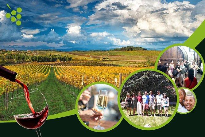 Bairrada Tour, where art and sparkling wines meet
