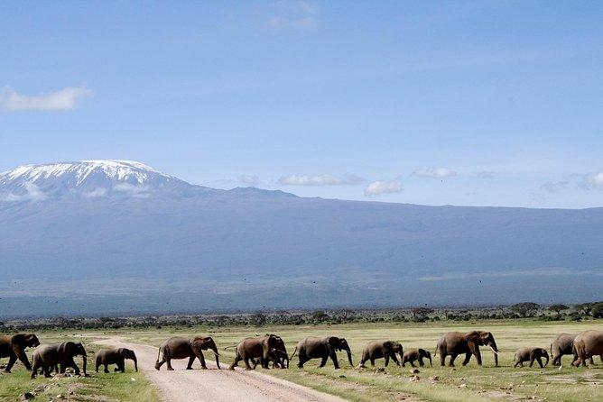 Private 6 Days Amboseli, Lake Naivasha & Masai Mara Safari