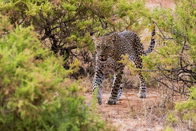 4 Days 3 Nights Samburu National Reserve & Lake Nakuru National park Safari