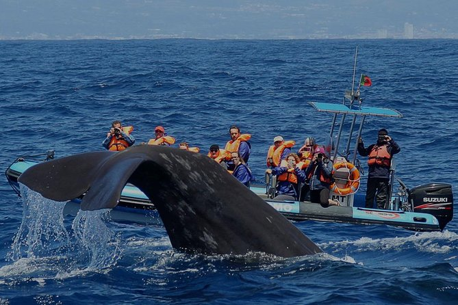 Whale and dolphin watching in Ponta Delgada - half day