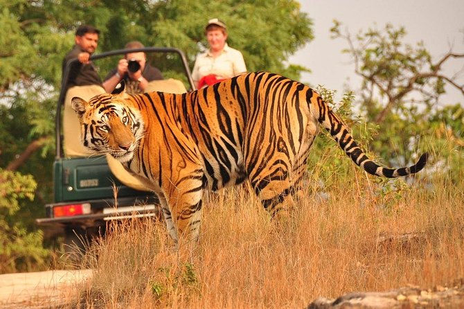 Ranthambore Tiger Safari Tickets With Optional Transfers