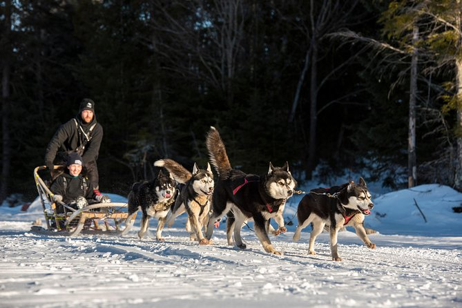 Two hours immersion in dogsledding
