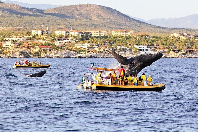 Whale Watching from Los Cabos