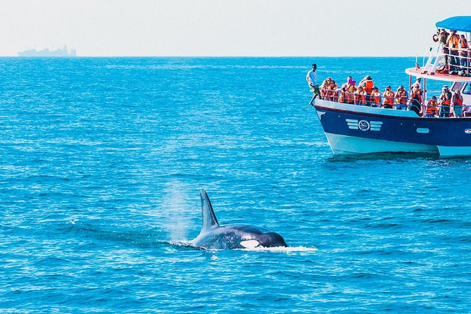 Whale Watching, Galle Fort, and River Madu day tour from Colombo