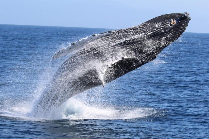 Walk-in Southern Coasts & Watch Whales - One Day Excursion in Mirissa