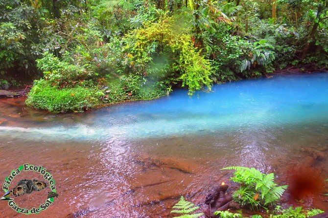 Tour to Río Celeste and our property with lodging and meals.