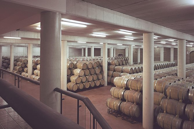 Olive oil and Navarre winery visit with tastings and lunch in small group tour