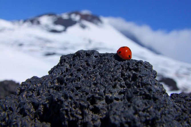 Etna Morning Experience