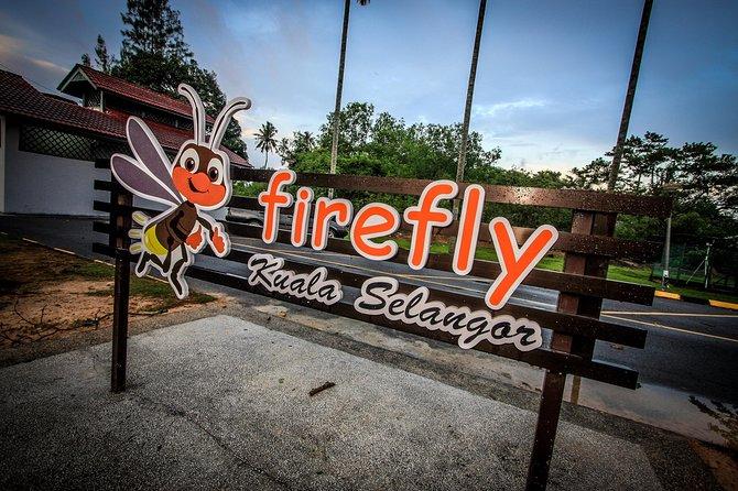 Fireflies Tour - Sic