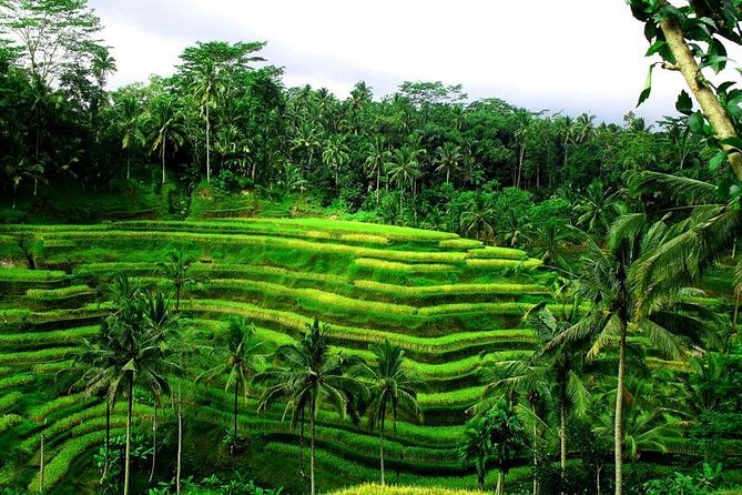 Ubud : Monkey Forest - Rice Terrace - Water Temple - Waterfall-Ticket Inclusive