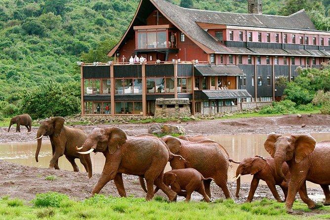 Private 7 days Kenya's Best wildlife safari