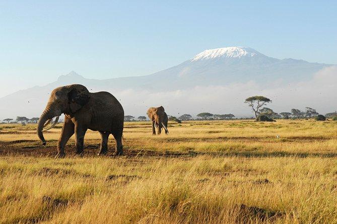 7 Days Tsavo West, Amboseli, Lake Nakuru & Masai Mara Wildlife Safari