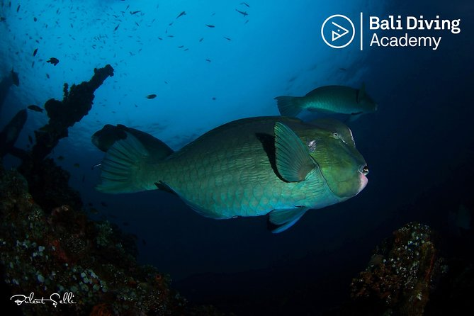 Discover Scuba Diving in Tulamben, beginner try dive (day trip from south bali)