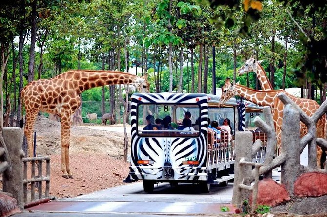 Chiang Mai Night Safari Park Admission Ticket with Hotel Transfer