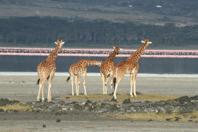 5 Days Lake Nakuru, Lake Elementaita & Masai Mara Wildlife Safari